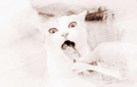 梦见猫吃东西 周公解梦之梦到猫吃东西