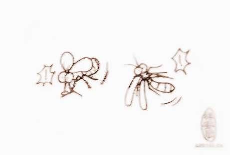 梦见苍蝇飞 周公解梦之梦到苍蝇飞图片