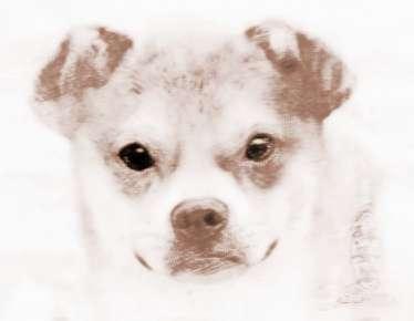 女人梦见可爱的小黄狗