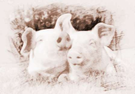 孕妇梦见好多猪是什么意思周公解梦