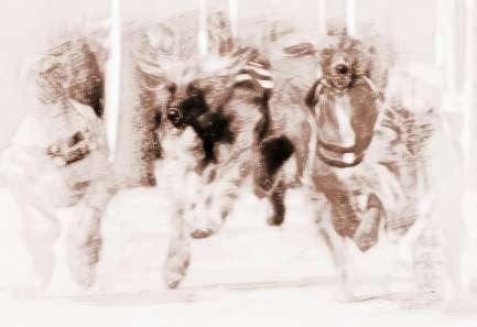 梦见狗追人 周公解梦之梦到狗追人