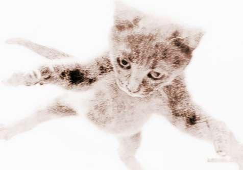 梦见会飞的猫 周公解梦之梦到会飞的猫