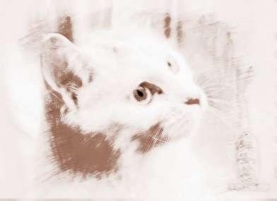 梦见猫出血 周公解梦之梦到猫出血