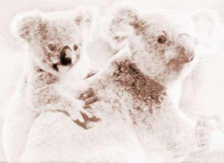 动物世界考拉的故事
