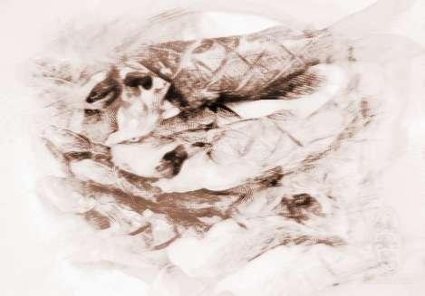 梦见干鱼干虾