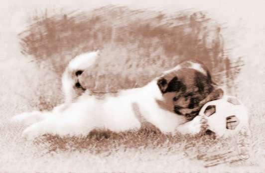 做梦梦见动物内脏_梦到动物内脏