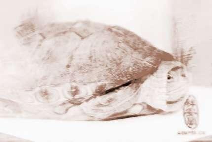 幼儿园纸杯手工制作动物乌龟