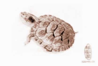 梦见养乌龟
