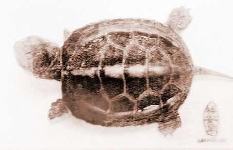 宝宝手工编织乌龟