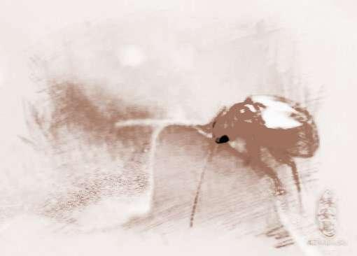 梦见抓虫子的吉凶: 基础安泰