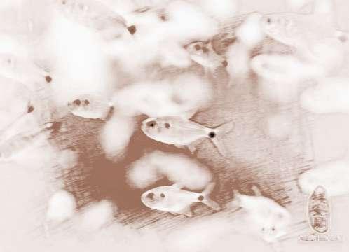 梦见抓小鱼 周公解梦之梦到抓小鱼