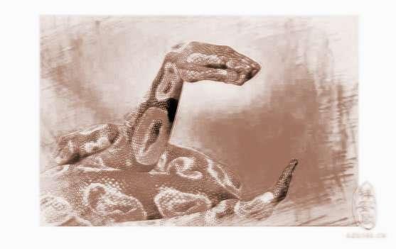 梦见两条大蛇被杀死