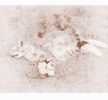 梦见家里猫咪死了