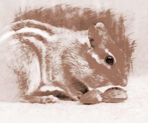 梦见自己杀死可爱的小老鼠