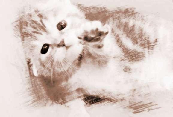 猫咪高兴图片大全可爱