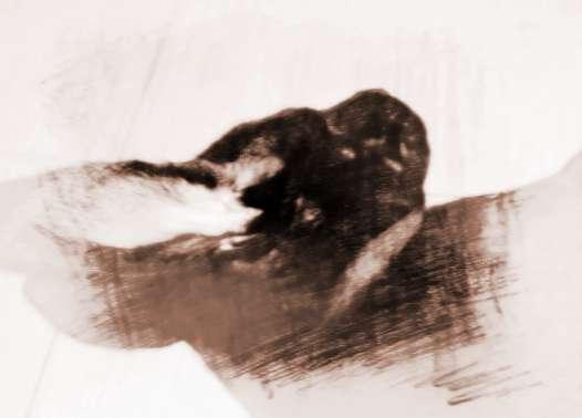 梦见有黑兔子   原版周公解梦兔   群兔上天得贵位   意思是周公解梦梦见一大群兔子上天了,自己将会得到职位上的提升,身居要职;   活兔在园百忧去   意思是周公解梦梦见在园子中看到活着的兔子,所有的烦恼忧愁将远离梦者;   白兔引路人提携   意思是周公解梦梦见白兔领路,将得到贵人相助,在工作上将得到上级的提拔      梦见兔子在原野奔跑   提醒梦者谈情说爱的机会到了,应该好好把握时机,发生的地点可能是冷饮店、店等场所;   梦见兔子奔跑   暗示梦者将得到贵人或通广大人士的帮助,或者有提高地