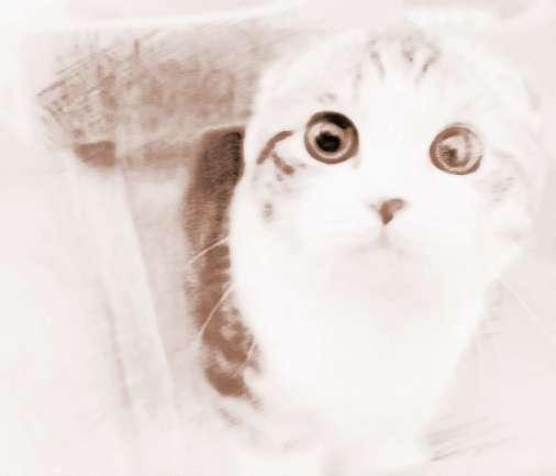 梦见可爱猫咪