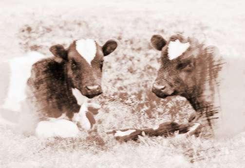 梦见把牛丢了