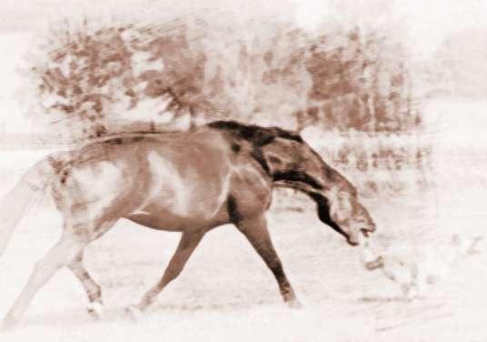 梦见被马追咬 周公解梦之梦到被马追咬