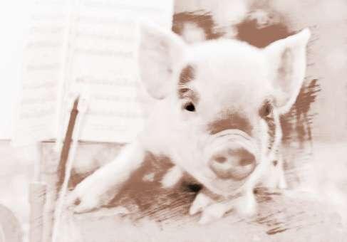 梦见猪和羊 周公解梦之梦到猪和羊