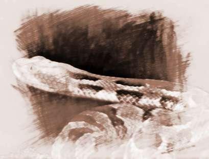 做梦梦见蛇_做梦梦见四条大蛇是什么意思_周公解梦_祥安阁风水网