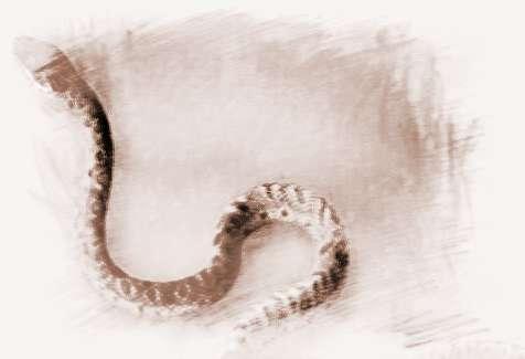 梦见4条蛇 周公解梦之梦到4条蛇