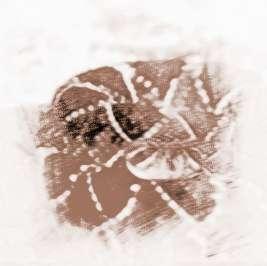 周公解梦女人梦到蛇_周公解梦 精彩解梦  梦见蛇在水里游有什么征兆?