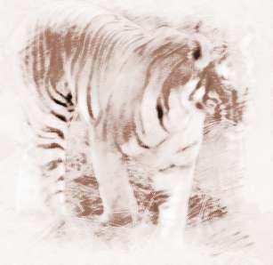 壁纸 动物 虎 老虎 桌面 307_298