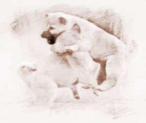 梦见两只小狗是什么意思