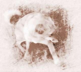 梦见被栓的小白狗