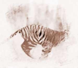 梦见老虎咬我手