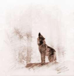 孕妇梦见被狼追