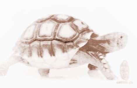 梦见乌龟跑很快