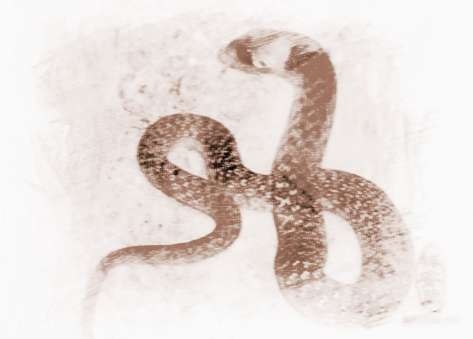 周公解梦女人梦到蛇_周公解梦 精彩解梦    女人梦见蛇咬自己的脚是什么意思?