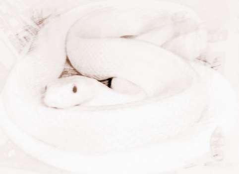 梦见被小白蛇咬