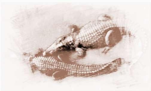 手工制作纸杯蛇动物