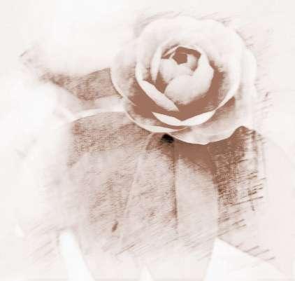 梦见五颜六色花