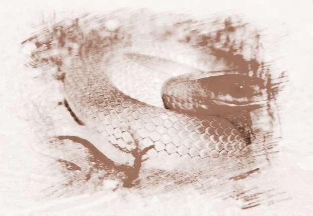做生意的人梦见绿色的蛇