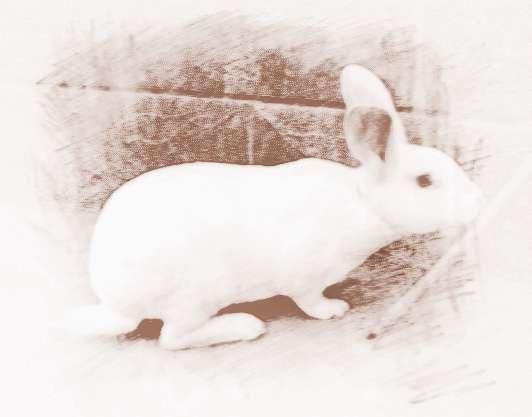 梦见被兔子追是什么意思