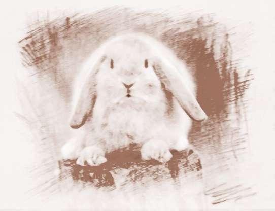 女人梦见兔子病了