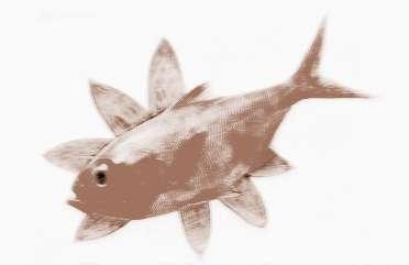 梦见鱼跳入怀中