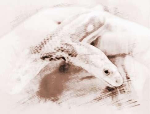 做梦梦见蛇_做梦梦见蛇并抓住装进袋子里是什么意思?