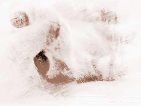 梦见白色的小猫