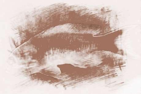 梦见被鱼咬到脚