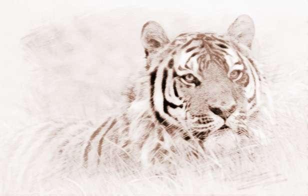 梦见老虎_孕妇梦见老虎代表了什么
