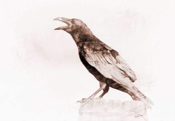 梦见乌鸦在叫