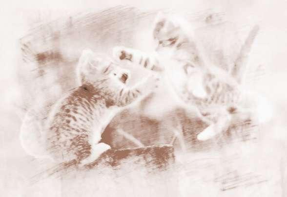 梦见猫和蛇打架