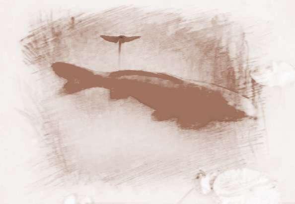 梦见抓了一条红鱼