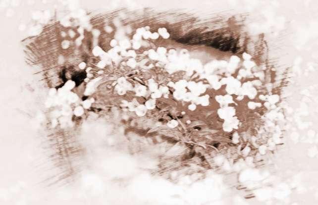 梦见很多白色的花