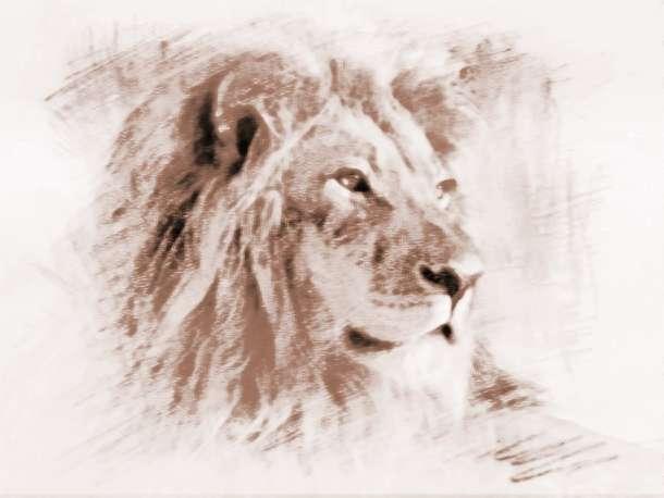 梦见狮子袭击我